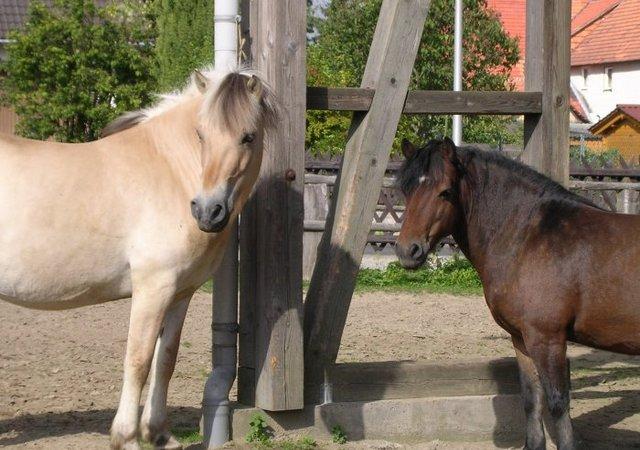 Bauernhof- und Landurlaub in Hessen