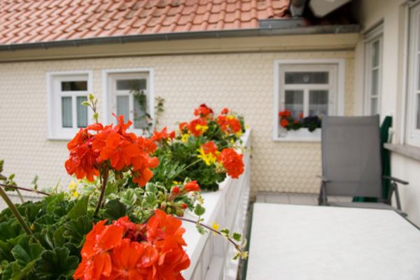 Bauernhof- und Landurlaub in Hessen - Ferienhof Zinn Ferienwohnung Schwalbe